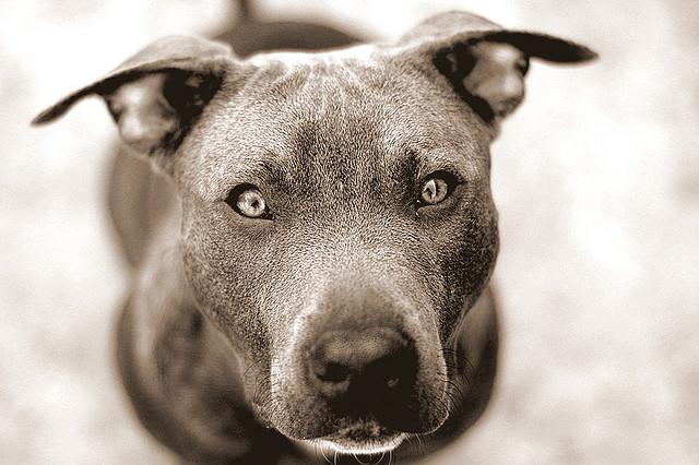 Satan wie ein Hund an der Kette. Bildquelle: http://www.flickr.com/photos/hand-nor-glove/421764457/sizes/z/in/photostream/