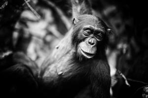 Argumente gegen die Evolution in Kurzform