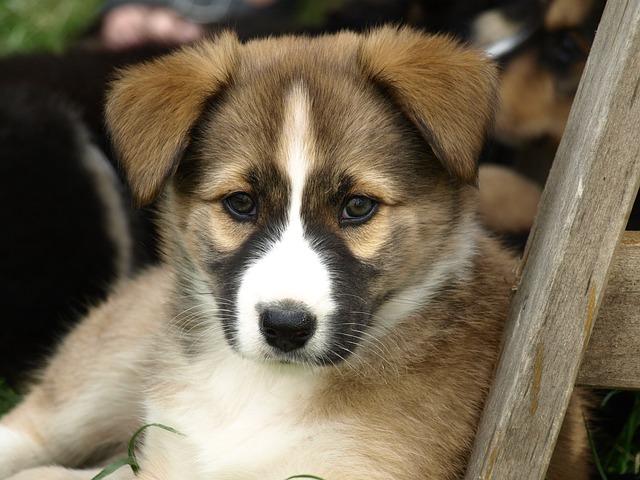 puppy-374968_640