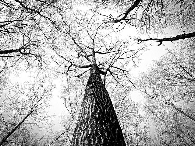 Die drei Bäume - eine Vorlesgeschichte zu Weihnachten